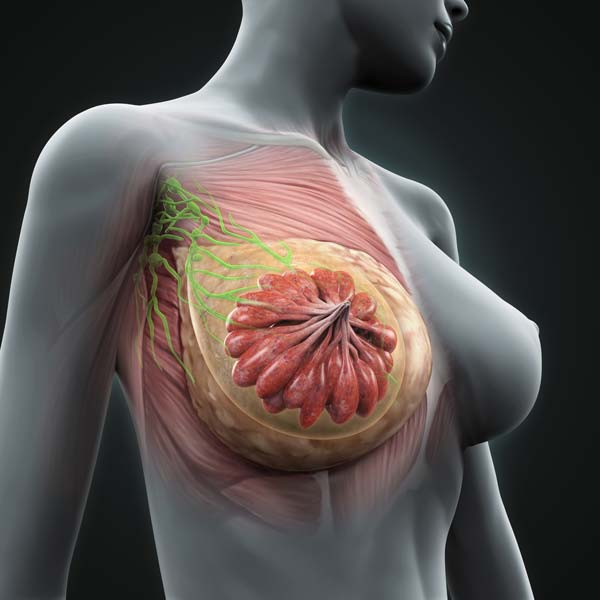 Главная причина рака груди - напиток, который вы пьете каждый день!