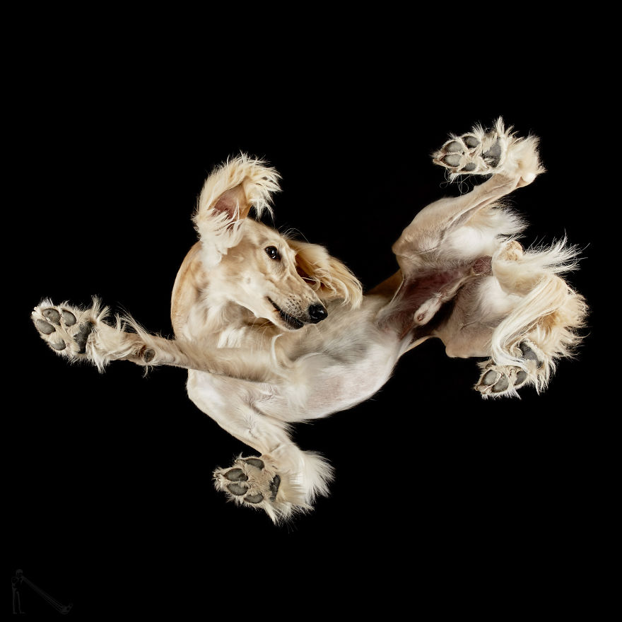 Я фоткал собак под стеклянным столом. Вот что из этого вышло!