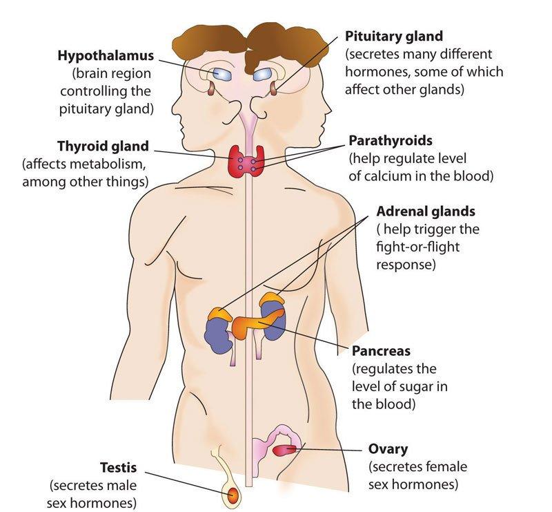 Анализ на половые гормоны: Расшифровка результатов