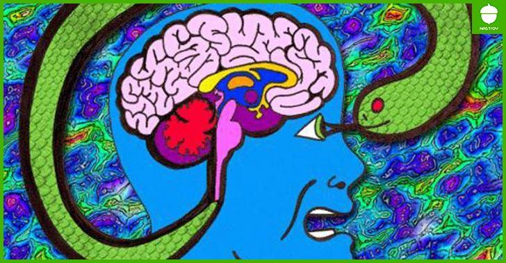 Татьяна Черниговская: Что нужно знать о мозге в первую очередь