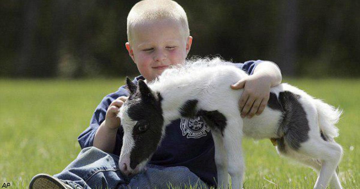 Вот самая маленькая лошадь в мире. Она растопит ваше сердце...