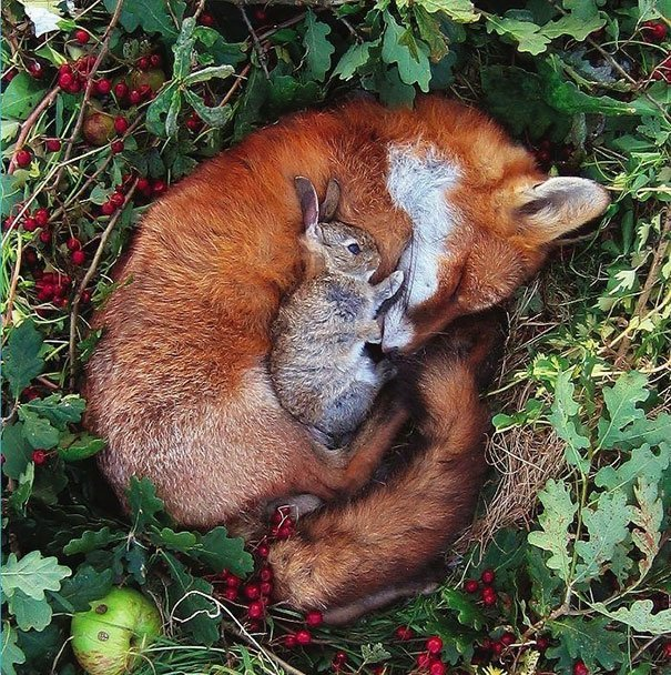 20 фотографий самой необычной дружбы животного мира!