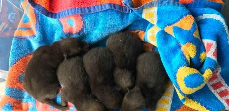 Мужчина думал, что нашел 5 щенят, но вскоре выяснилось, что их мамой была вовсе не собака…