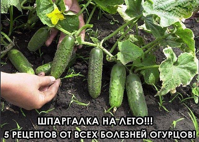 ШПАРГАЛКА НА ЛЕТО