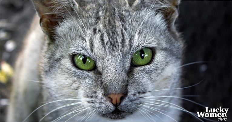 Кошка — показатель благополучия человека!