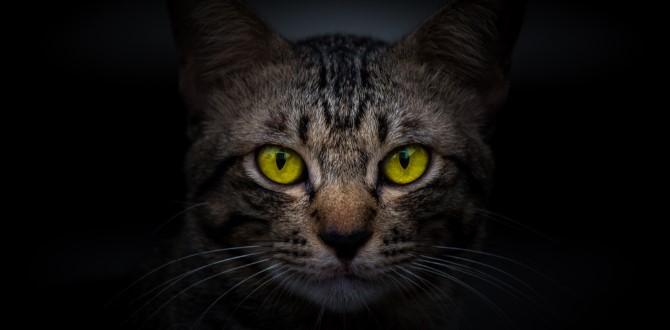 Коты реально защищают дом от злых духов и негативной энергии! Вот почему Вот в чем секретная сила котов.