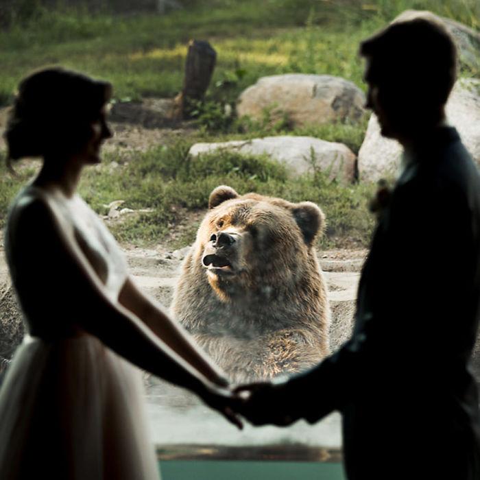 Реакция медведя на свадьбу пары в зоопарке повеселила интернет (3 фото)!
