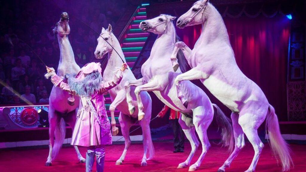 Конь танцует в стойле со своей хозяйкой — очень позитивное видео