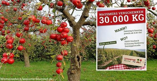 Ферма в Германии бесплатно подарила людям 30 тонн яблок. Их некому продавать! А кто-то раздавил бы бульдозером)
