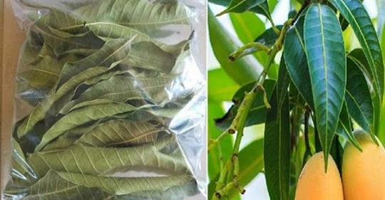 Один лист поможет вам отрегулировать давление, очистить почки и произвести нужное количество инсулина