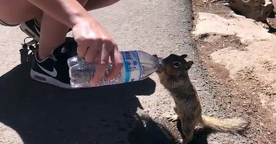 Измучeнная жаждой белочка попросила у людей попить