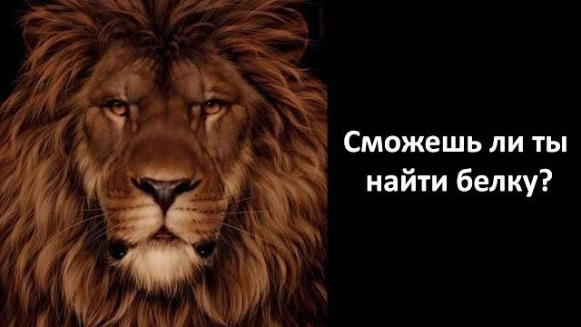 Только самые внимательные найдут белку на этой картинке льва