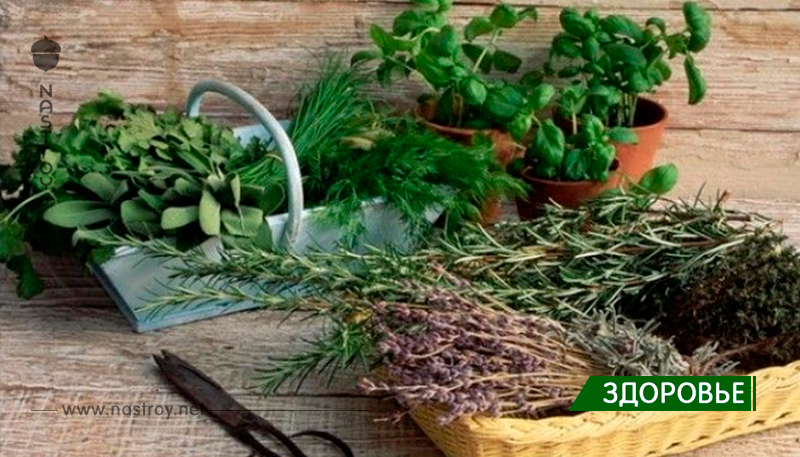 6 трав, которые снижают уровень гормона стресса кортизола