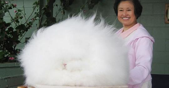 Лохматое чудо отнесли в парикмахерскую. Взгляните, что оказалось под горой шерсти!
