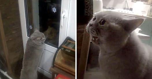 Кот просит открыть балкон человеческим голосом