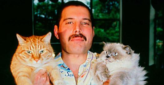 Взаимная любовь: Фредди Меркьюри и его кошки