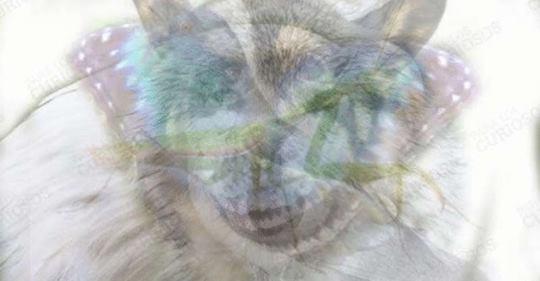Животное, которое видится первым, определит характер. Очень точный тест!