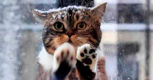 Кошка пришла в кафе просить помощи людей, ее малыши замерзали на морозе