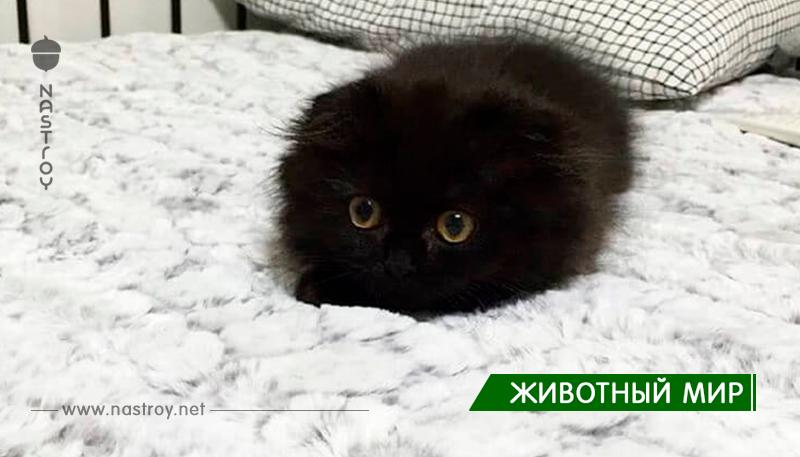 Знакомьтесь, Джимо — кот с самыми большими глазами