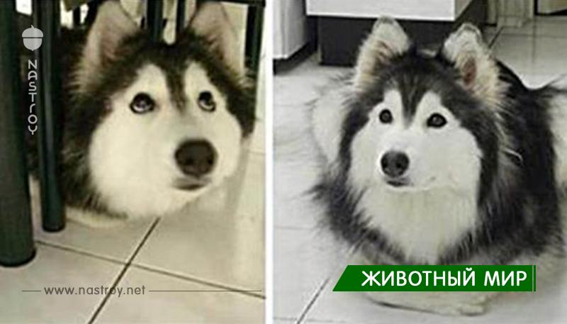 Собака выросла с котами, спустя 2 года владелец заметил некую странность с её лапами…