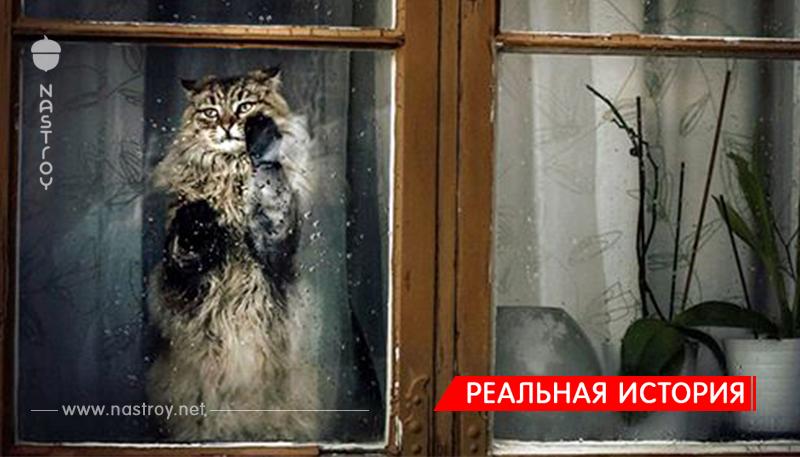 Кот, умолявший о помощи