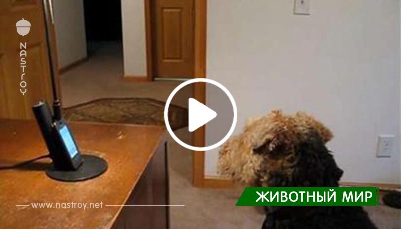Собака очень скучала, и хозяин устроил для нее телефонный разговор.