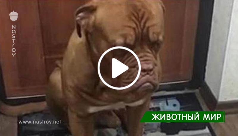 Реакция пса на ругающую его хозяйку заслуживает Оскара…