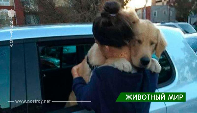 15 фото, которые покажут что люди не заслуживают таких преданных друзей, как собаки
