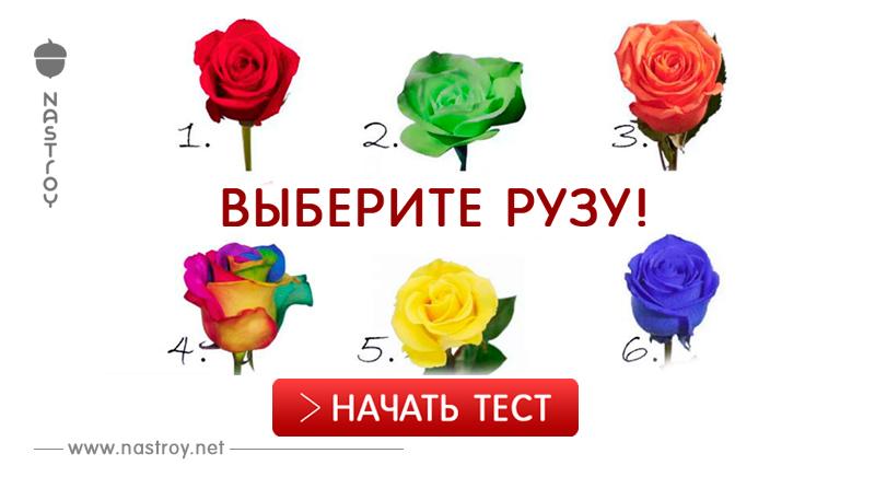 Милое развлечение на минутку: Выберите розу и узнайте о своей личности кое-что интересное!