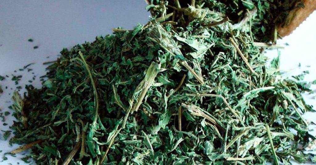 Растение «вечной молодости»: снижает уровень сахара, очищает почки, омолаживает кожу, устраняет выпадение волос и не только!