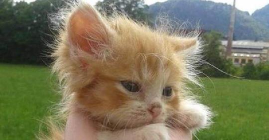 Крошечный рыжий котёнок был найден в лесу без мамы кошки. И вот два года спустя!