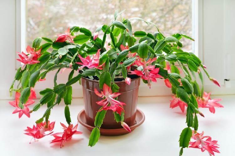 Они даже ночью выделяют кислород. 9 растений, которые хорошо иметь в спальне