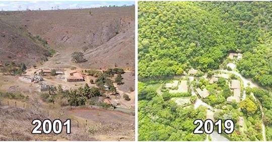 Пара доказала на на своем примере, что лес можно вернуть - за 20 лет