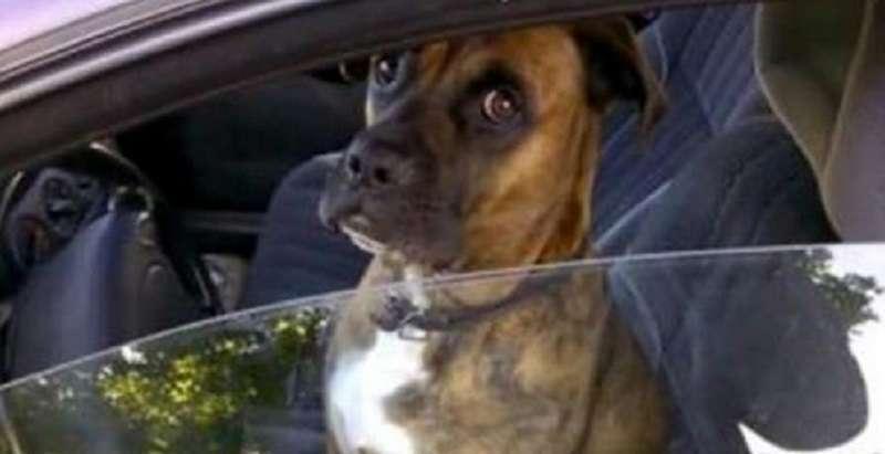 Пес сидел на водительском сидении, и парни решили над ним подшутить!