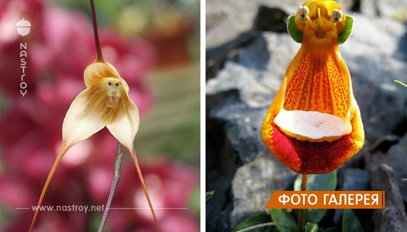 16 цветков, которые похожи на что-то другое