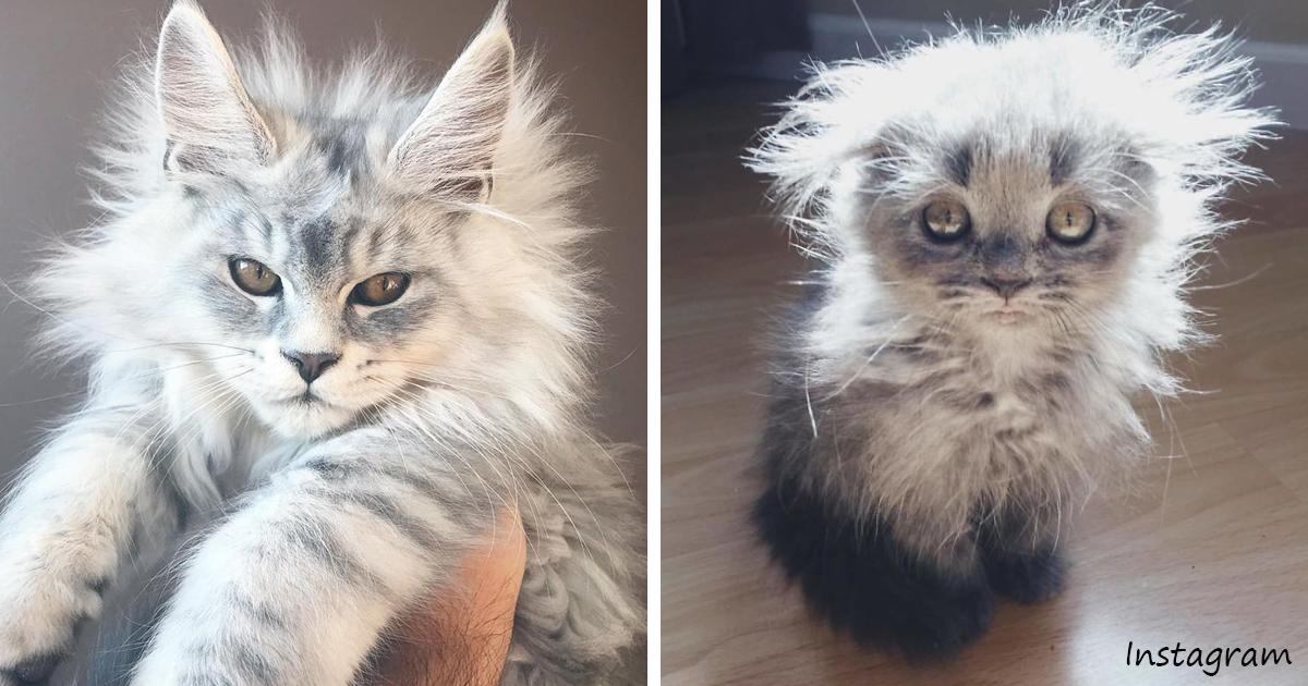 8 пород кошек для тех, у кого их никогда не было8 пород кошек для тех, у кого их никогда не было