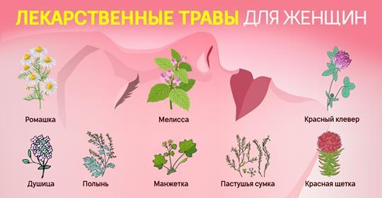 Какие травы необходимы женщинам