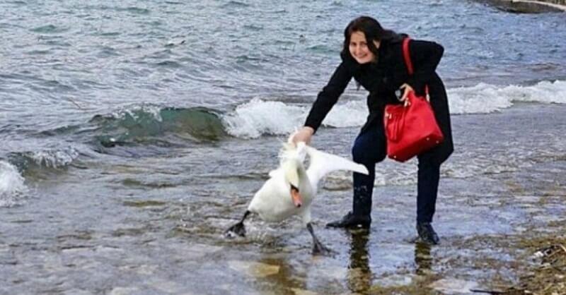 Ради селфи она вытащила из озера лебедя. Последствия ужасны..