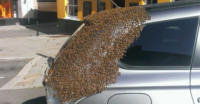 20000 пчел преследовали ее машину в течение 2 дней. Причина скрывалась в багажнике.