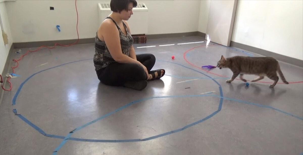 Учёные из США выяснили, что кошки относятся к людям, как дети к своим родителям. Помог эксперимент