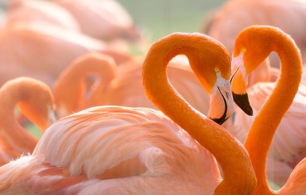Каким знакам Зодиака период с 20 по 31 октября может подарить настоящую любовь