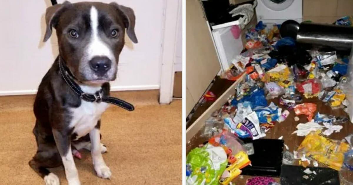 Hund isst verhungerte Katze – Besitzerin ließ die Tiere zum Verhungern in verlassener Wohnung zurück