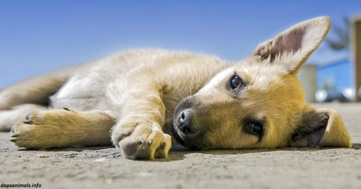 Голландия   первая в мире страна без единой бродячей собаки. Вот как им это удалось