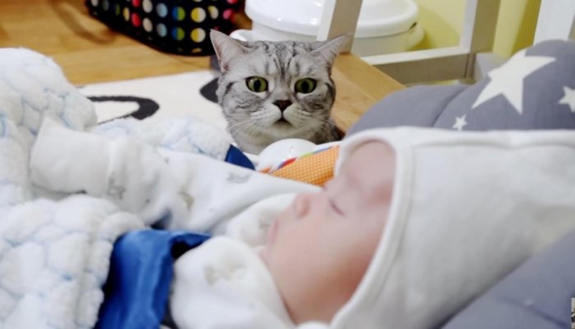 Хозяйка показала котам новорожденного ребенка, их реакция ЭТО НЕЧТО!