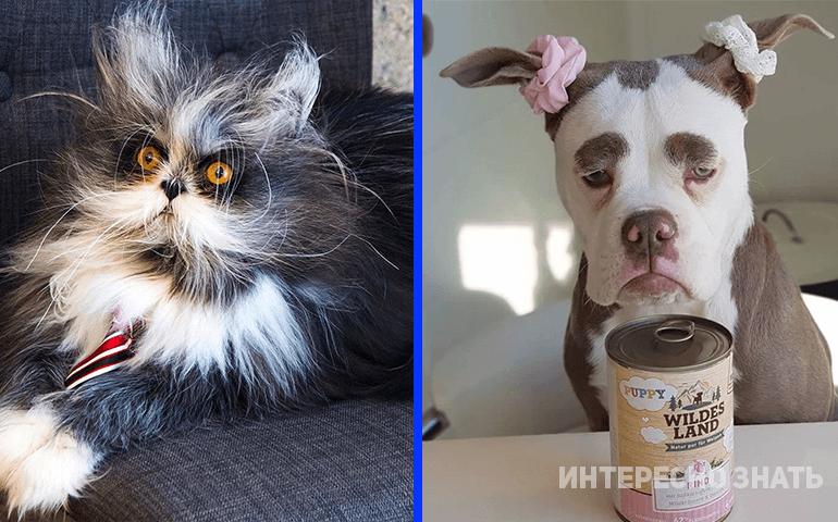 7 животных с необычной окраской, которая кажется фотошопом