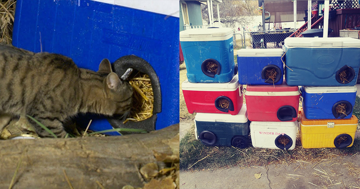Мужик делает зимние приюты для бездомных кошек из выброшенных кулеров