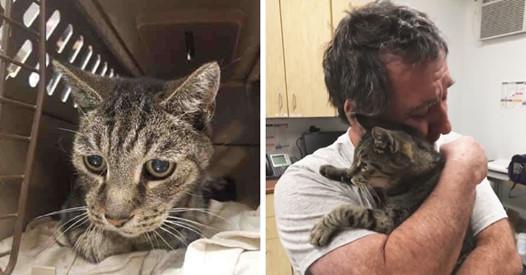 Мужчина год безуспешно искал своего кота. Они встретились через 7 лет, и слёз вам будет не сдержать