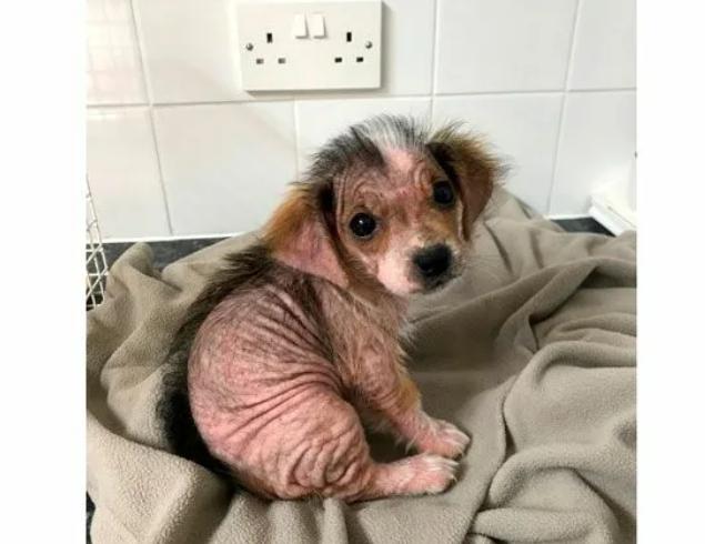 Собаку хотели усыпить, но волонтёр забрала её к себе. Какой она стала через год (+фото)