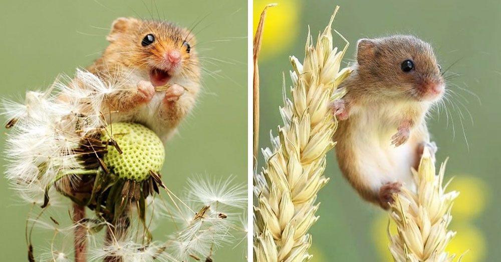 Британец настолько круто фотографирует мышей, что их полюбят даже те, кто всегда боялся