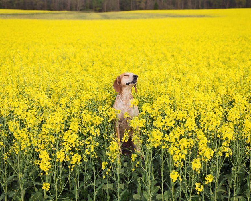 Вот что получается, когда фотограф берет собаку в путешествие